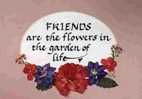 friendship-flower